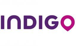 indigo-taille