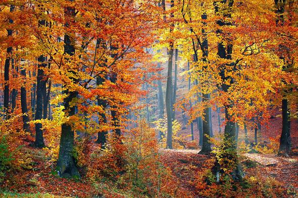 Activités pendant les vacances d'automne
